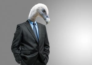 Portrait of a business dressed vulture